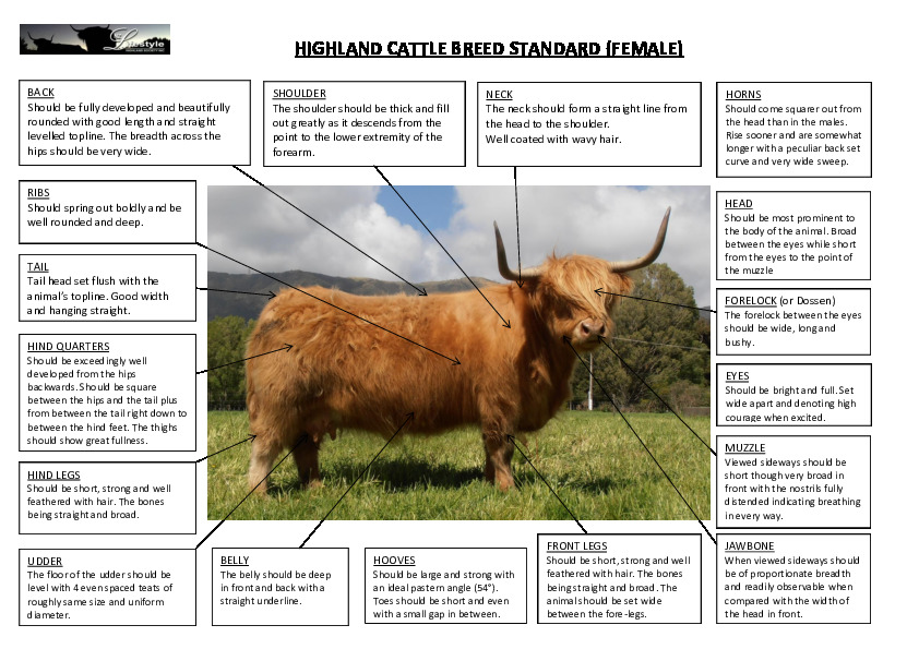 The Standard Highland Cow
